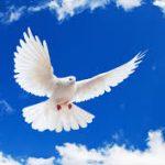 Después de París, ¿volverá la paz algún día?